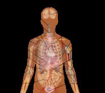 B - Anatomy Graphic